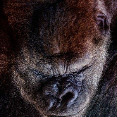 Zoo, la tristeza infinita