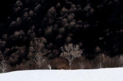 Winter © 2020 franMoreno