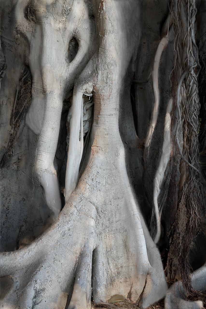 Elefantes arbóreos III © 2021 franMoreno