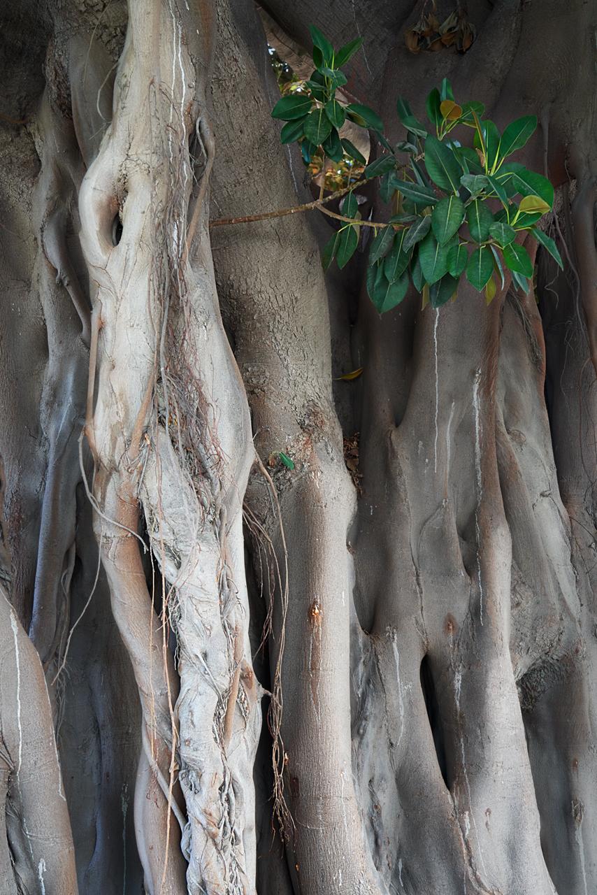Elefantes arbóreos I © 2021 franMoreno