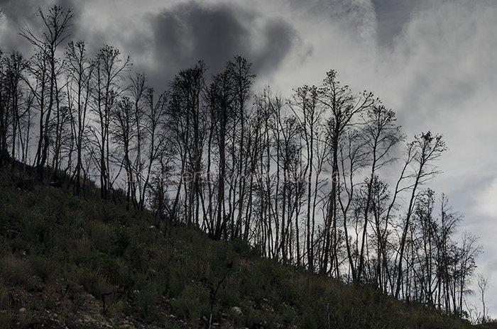 Senda Cavanilles. Incendio de Cortes de Pallás. Julio 2012